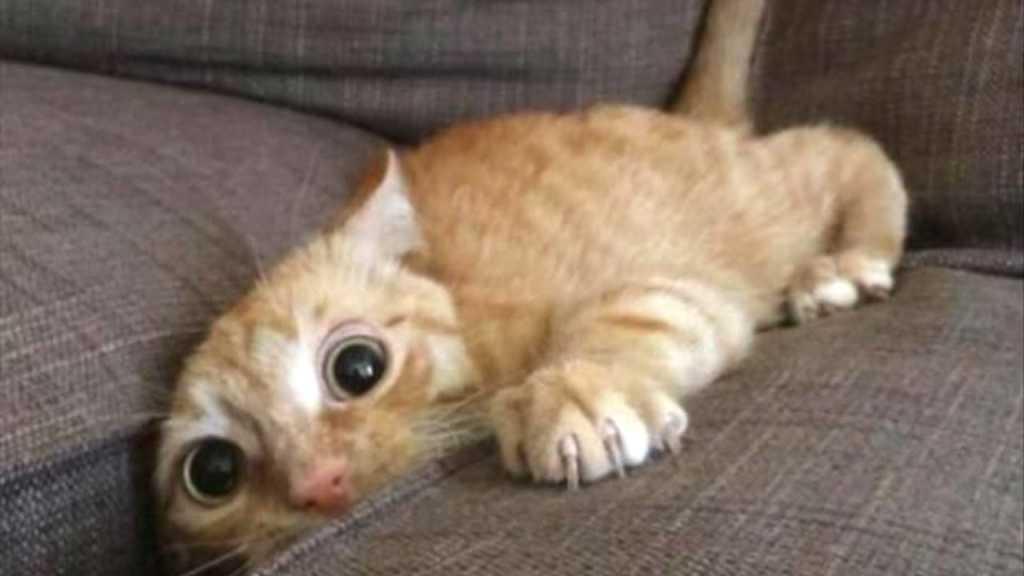 Understand Cat Behavior
