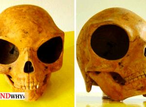 Mysterious sealand skull